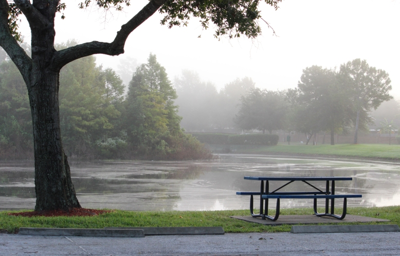fog park IMG_1219