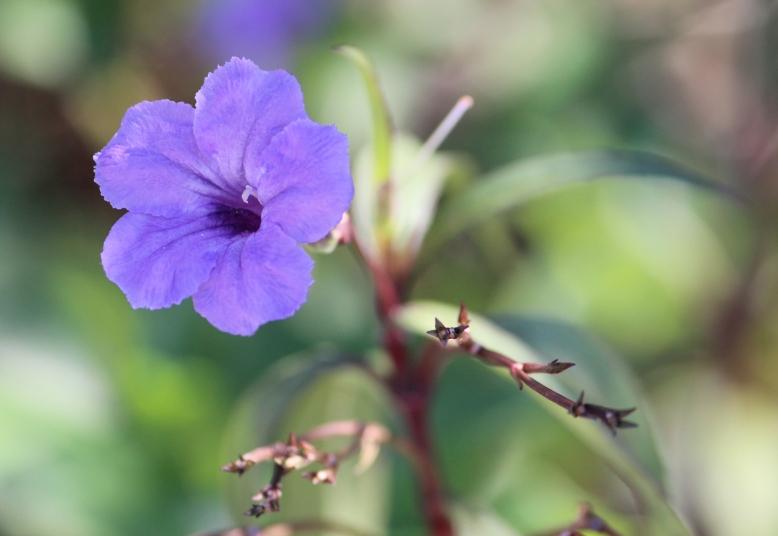 purple flower IMG_1686