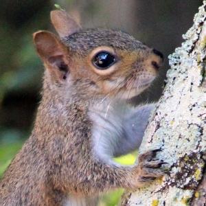 squirrel IMG_1624