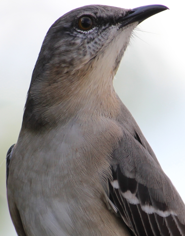 birdy IMG_1892