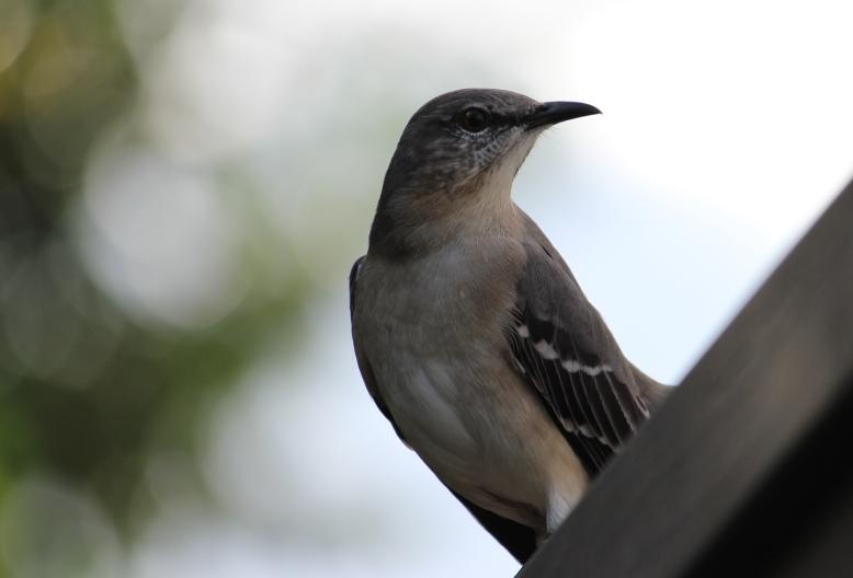 birdy IMG_1893