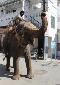 Udaipur IMG_4745